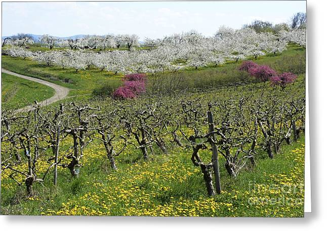 Orchard In France Greeting Card