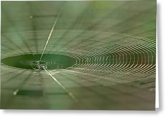 Greeting Card featuring the photograph Orchard Orbweaver #2 by Paul Rebmann