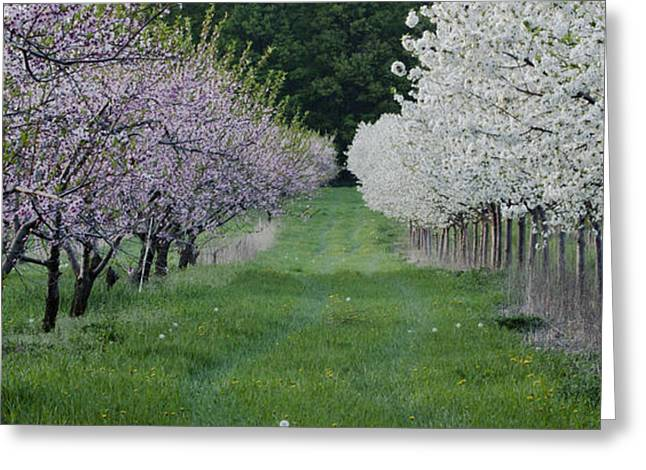 Orchard Greeting Card by Timothy J Berndt