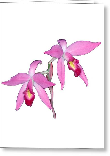 Orchid 1-1 Greeting Card