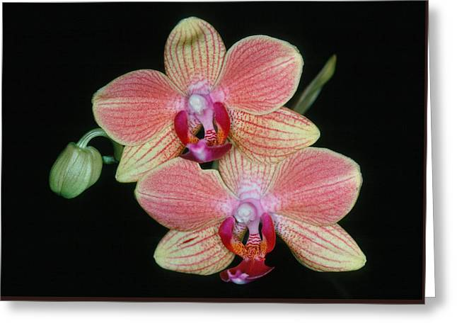 Orchid 4 Greeting Card