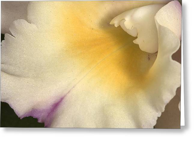 Orchid 486 Greeting Card