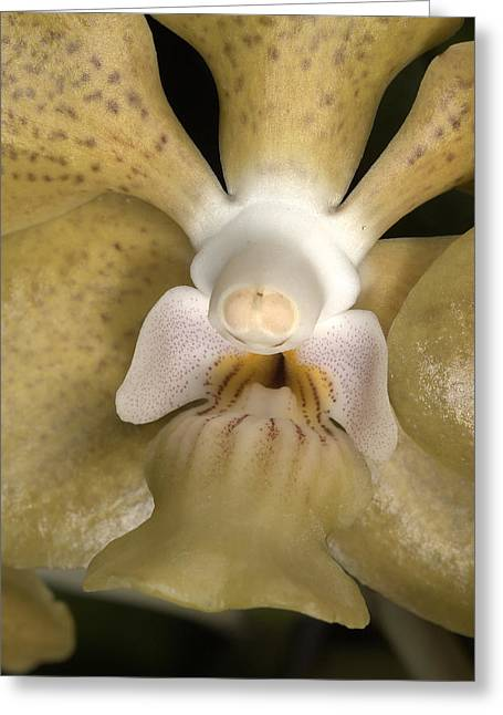Orchid 500 Greeting Card