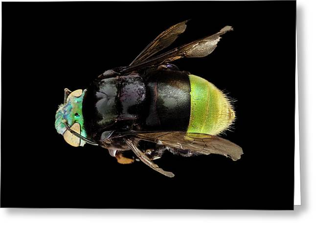 Orchid Bee Greeting Card