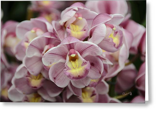 Orchid Bouquet Greeting Card by Penny Lisowski
