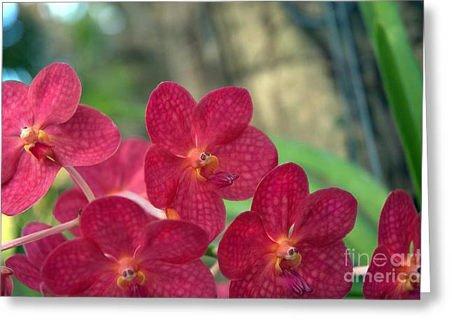 Orchid Bugs Greeting Card
