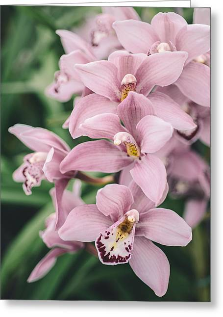 Orchid Cascade Greeting Card by Nastasia Cook