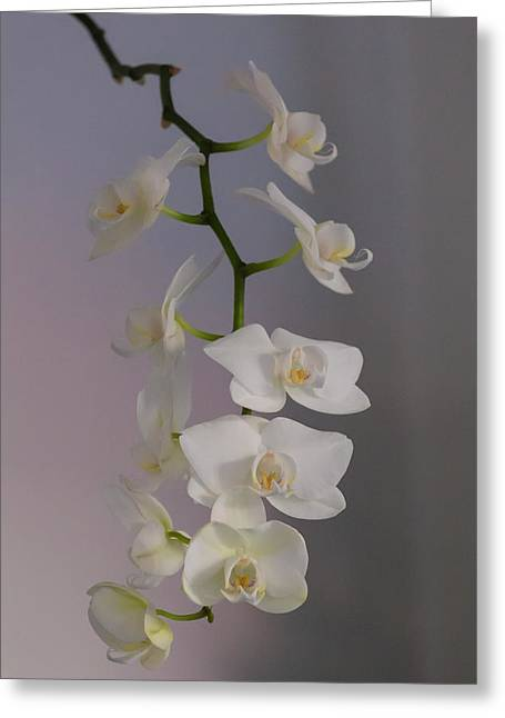Orchid Cascade Greeting Card
