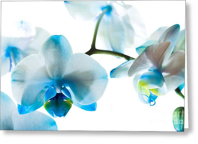 Orchid Closeup Greeting Card by Boon Mee