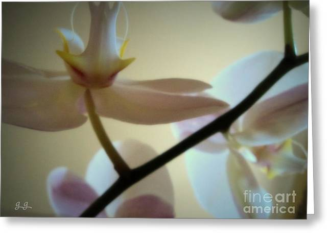Orchid Composition Greeting Card by Geri Glavis