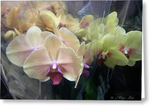 Orchid Dream One Greeting Card by Mitzi Lai