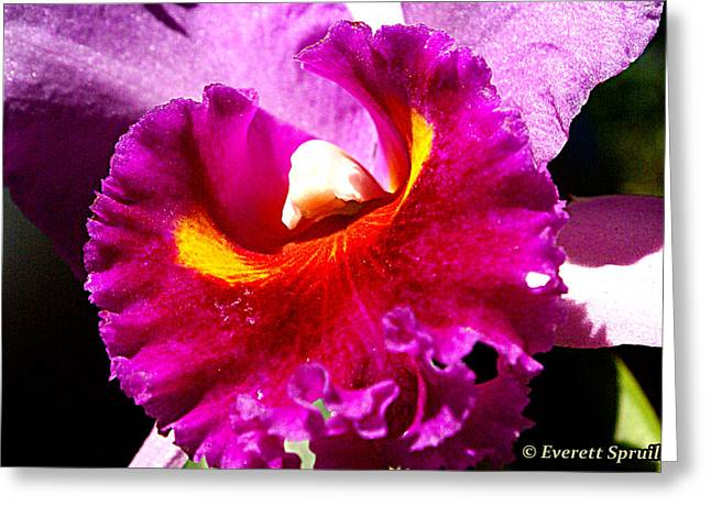 Orchid Greeting Card by Everett Spruill