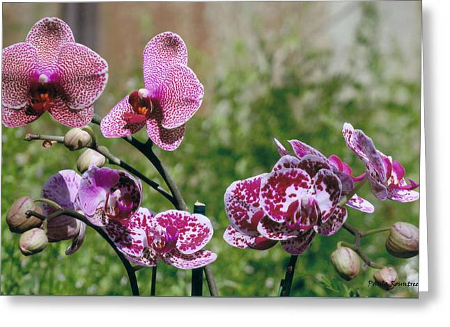 Orchid Field Greeting Card by Paula Rountree Bischoff