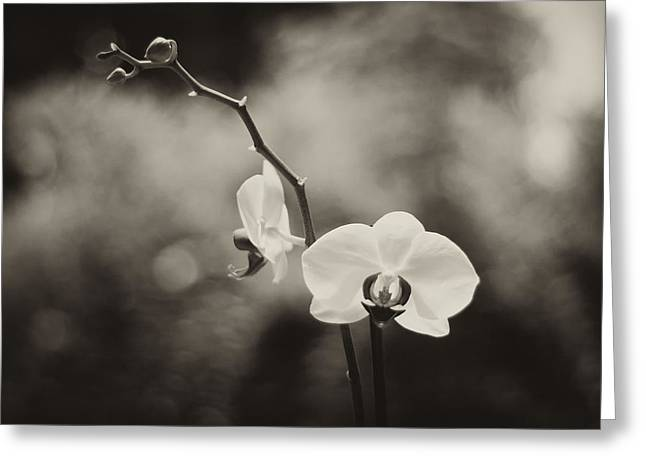 Orchid Fine Art Greeting Card