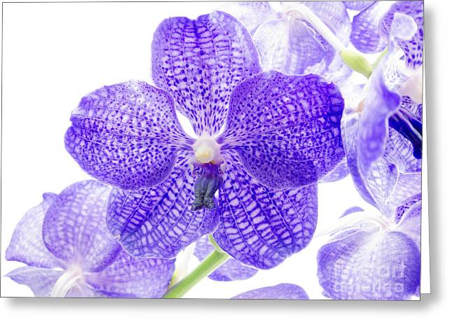 Orchid Flower Greeting Card by Boon Mee