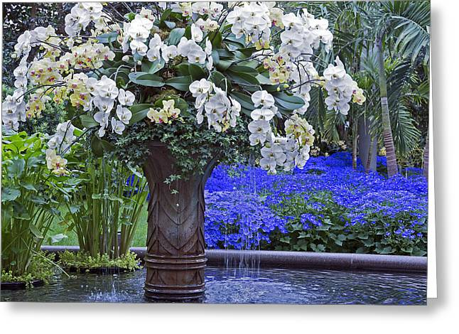 Orchid Fountain Greeting Card by Jennifer Nelson