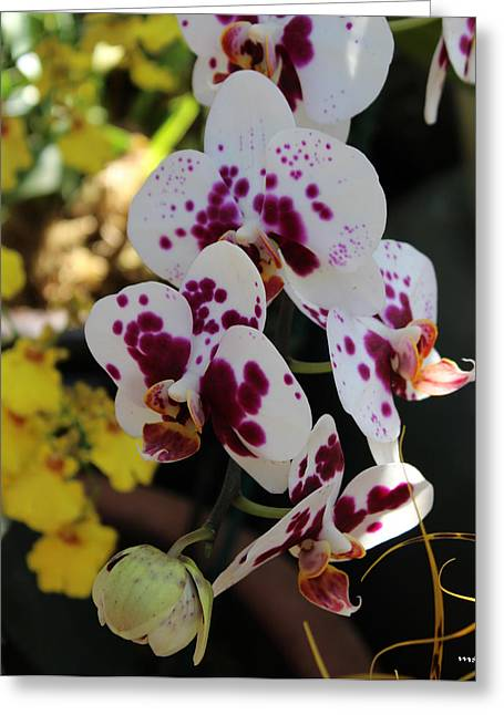 Orchid Four Greeting Card by Mark Steven Burhart