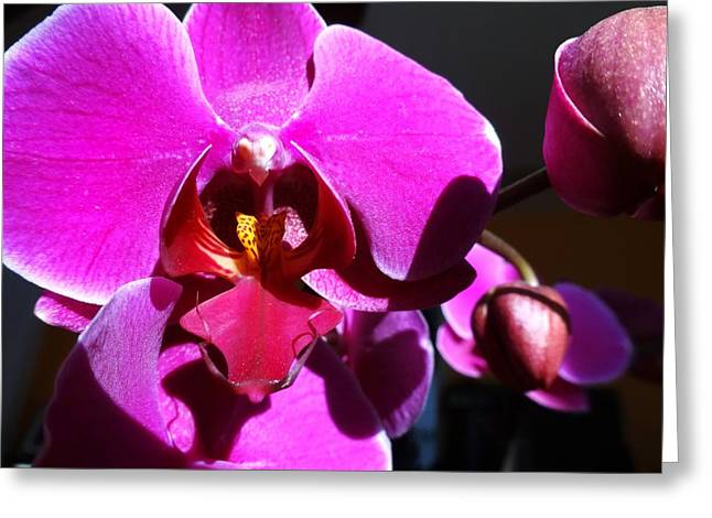 Orchid From My Valentine 3 Greeting Card