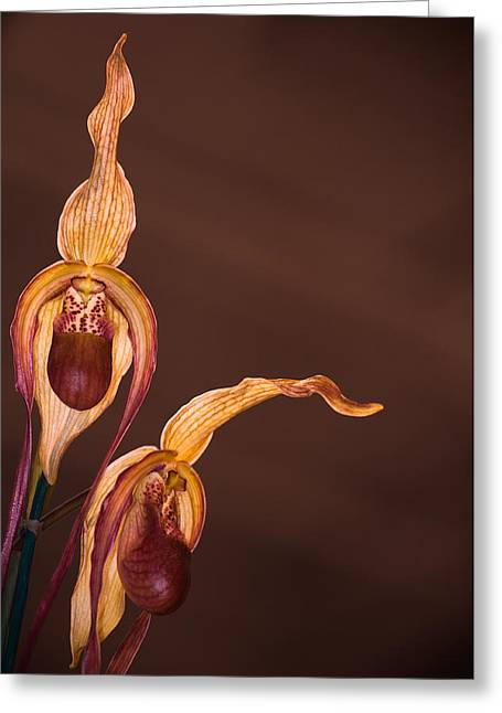 Orchid Greeting Greeting Card