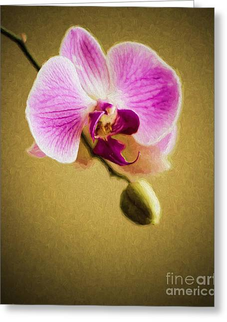 Orchid In Digital Oil Greeting Card