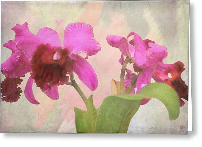 Orchid In Hot Pink Greeting Card by Rosalie Scanlon