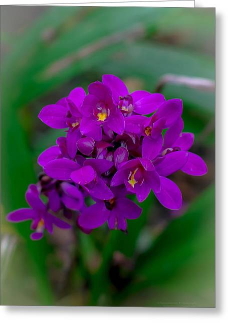 Orchid In Motion Greeting Card
