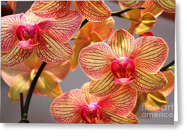 Greeting Card featuring the photograph Orchid by Judy Palkimas