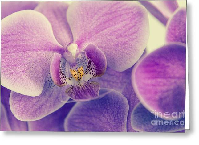 Orchid Lilac Dark Greeting Card by Hannes Cmarits