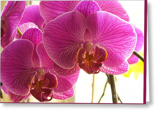 Greeting Card featuring the photograph Orchid by Lingfai Leung