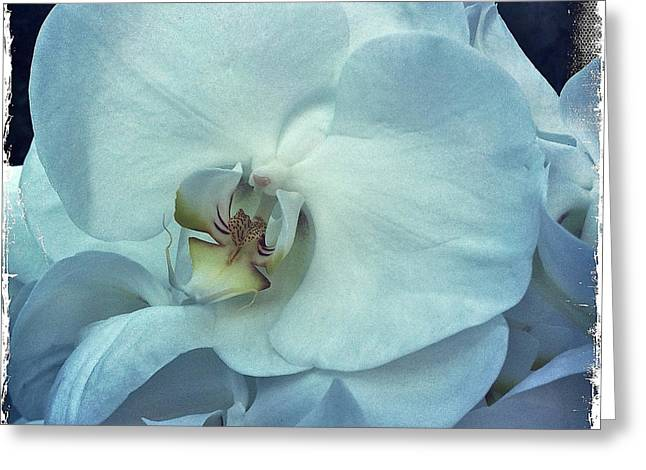 Orchid Greeting Card by Nina Prommer