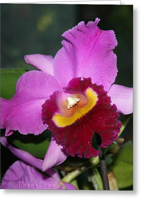 Orchid Nose 2 And A Reminder To Utter The Words Thank You. Greeting Card