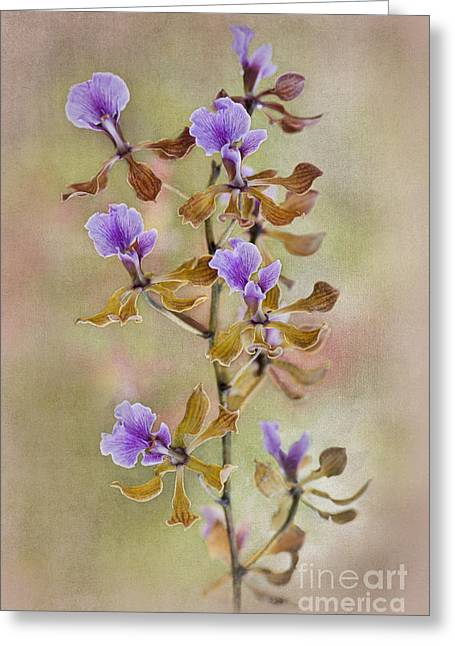 Orchid Organza Greeting Card by Jacky Parker