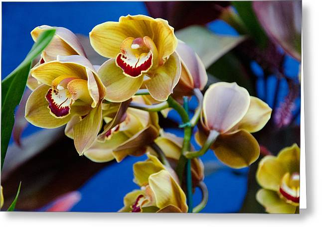 Orchid Pt 1 Greeting Card by Heidi  Kleva
