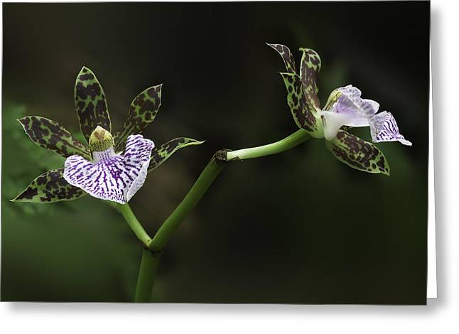 Greeting Card featuring the photograph Orchid by Ram Vasudev