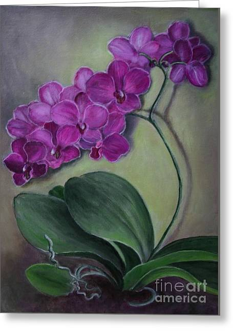 Orchid Greeting Card by Randy Burns
