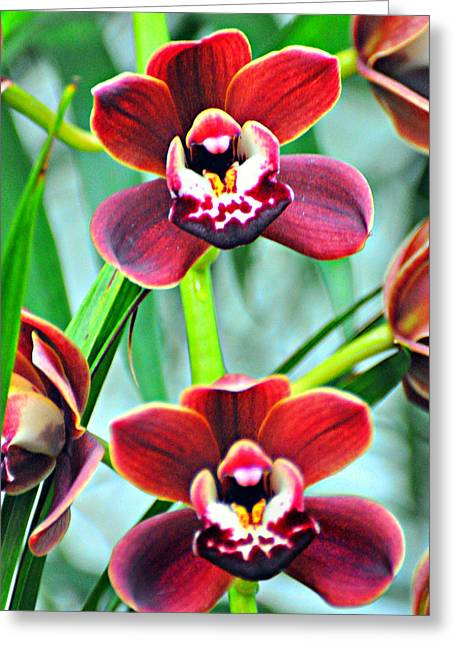 Orchid Rusty Greeting Card by Marty Koch