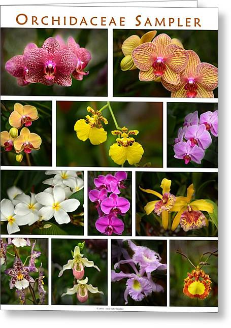 Orchid Sampler Greeting Card