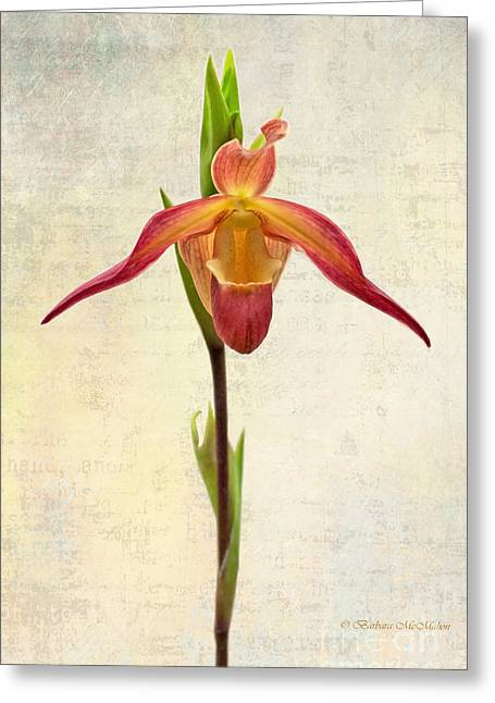 Orchid Series 104 Greeting Card