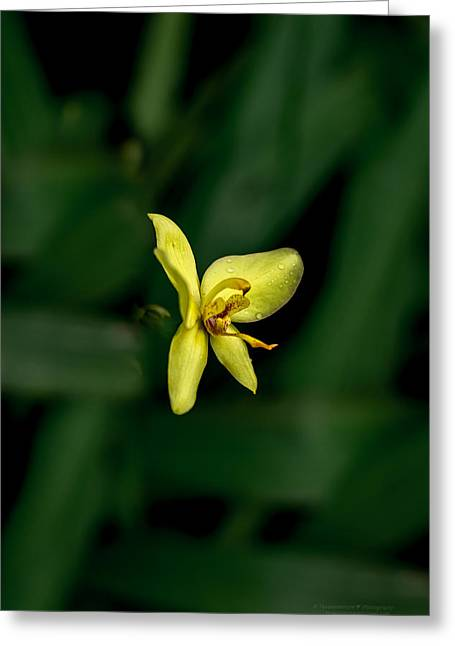Orchid Suspense  Greeting Card