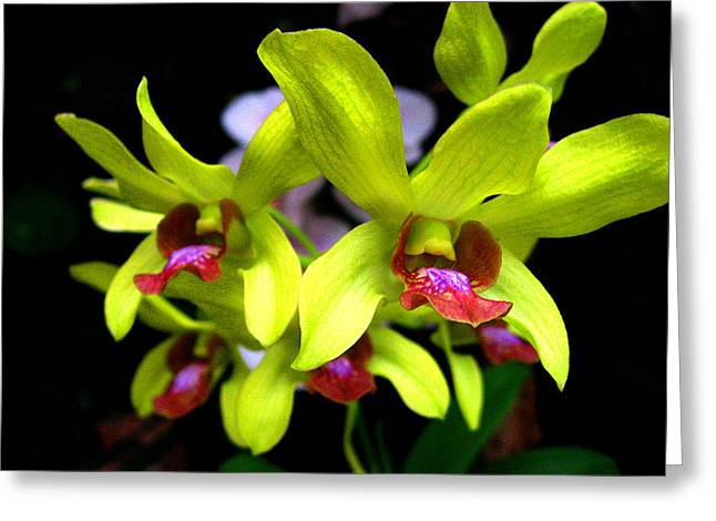 Orchid. Tenerife. Canary Islands. Greeting Card