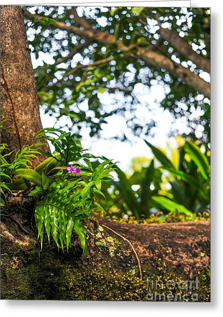 Orchid Tree Moss And Beauty Greeting Card
