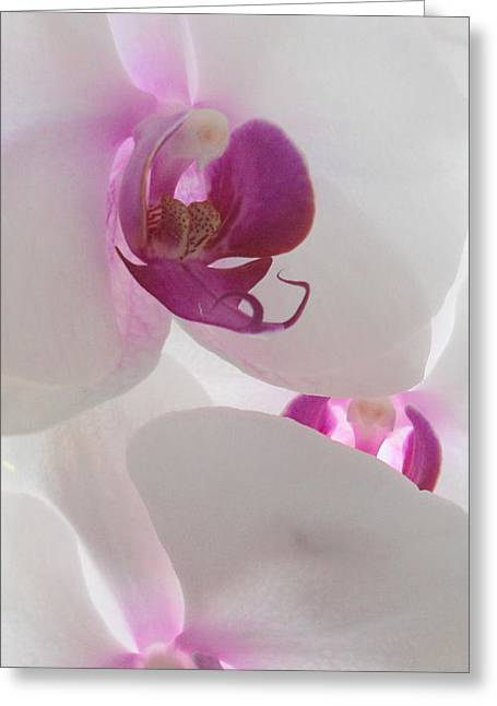 Orchid Trio Greeting Card by Kathy Spall