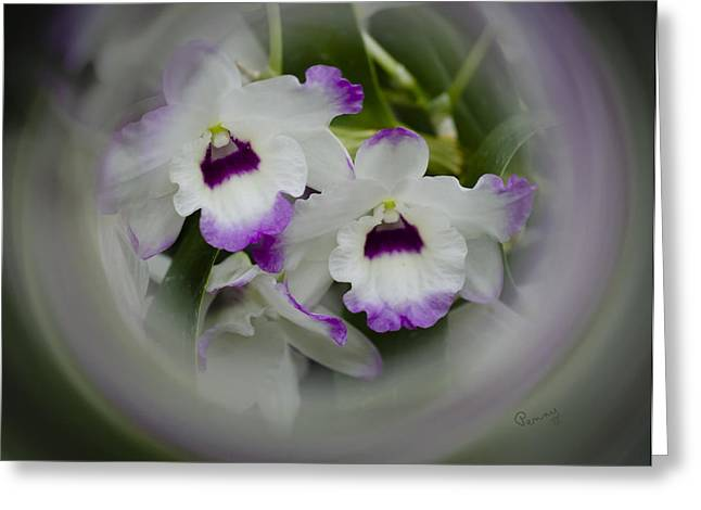 Orchid Wine Swirl Greeting Card by Penny Lisowski