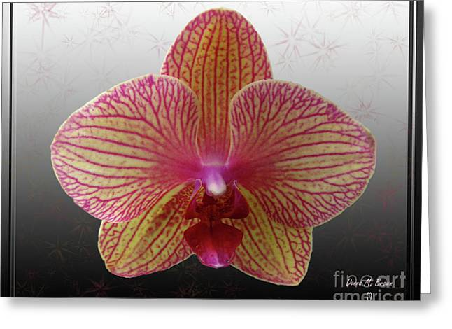Greeting Card featuring the photograph Orchid  With Stars by Donna Brown