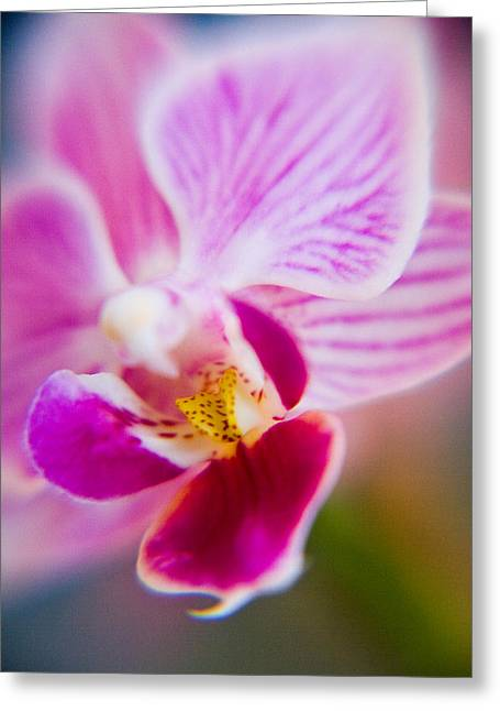 Orchide Detail 2 Greeting Card by Kim Lagerhem
