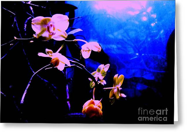 Orchidia Greeting Card