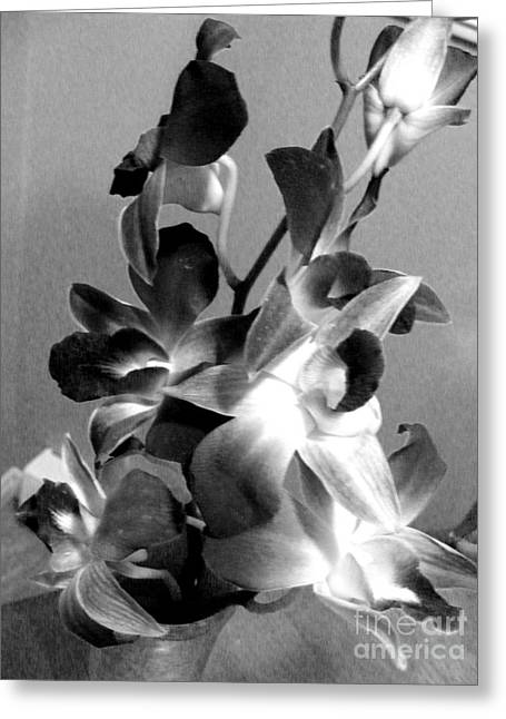 Orchids 2 Bw Greeting Card