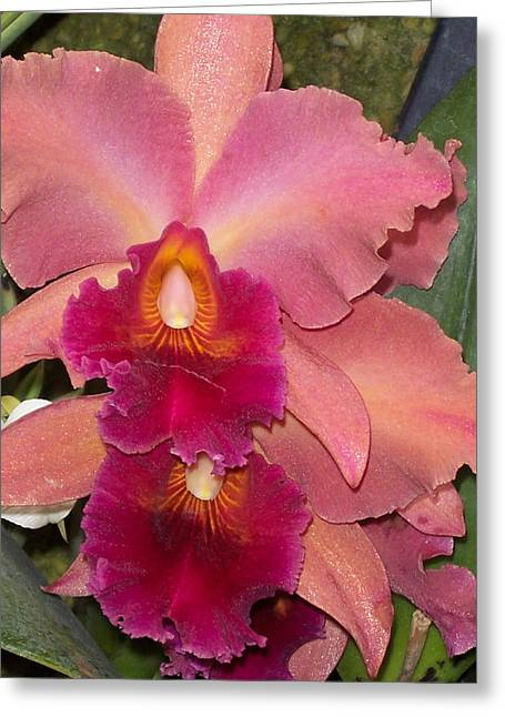 Orchids 4 Greeting Card by David Nichols