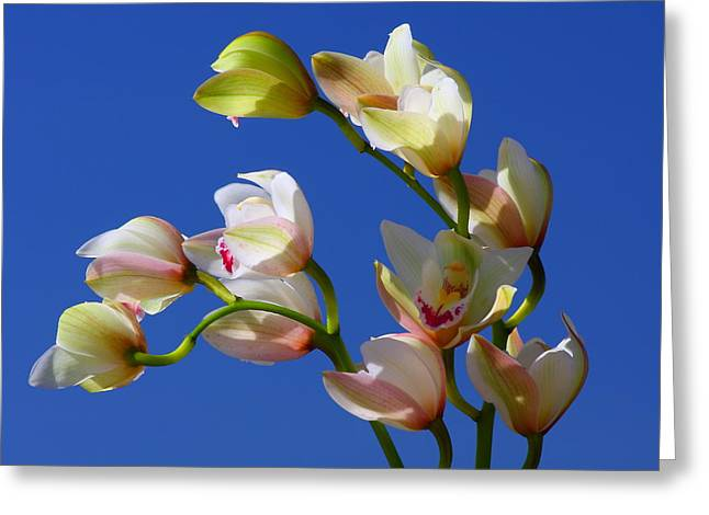 Orchids Against A Blue Sky Greeting Card