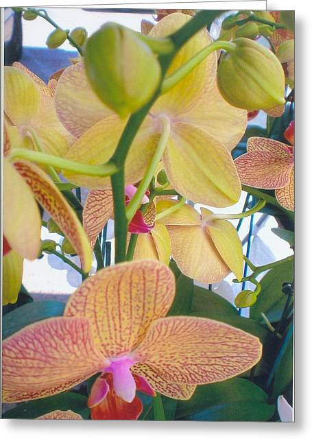 Orchids And Buds Greeting Card
